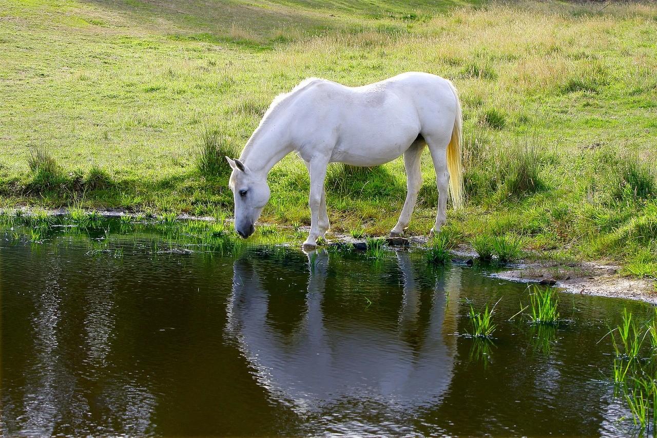 alimentation-cheval-2