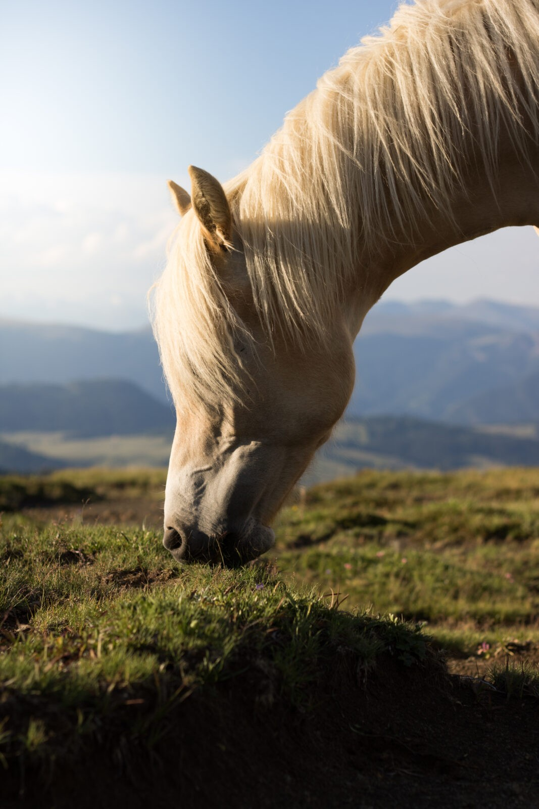 alimentation-chevaux-âgés -2