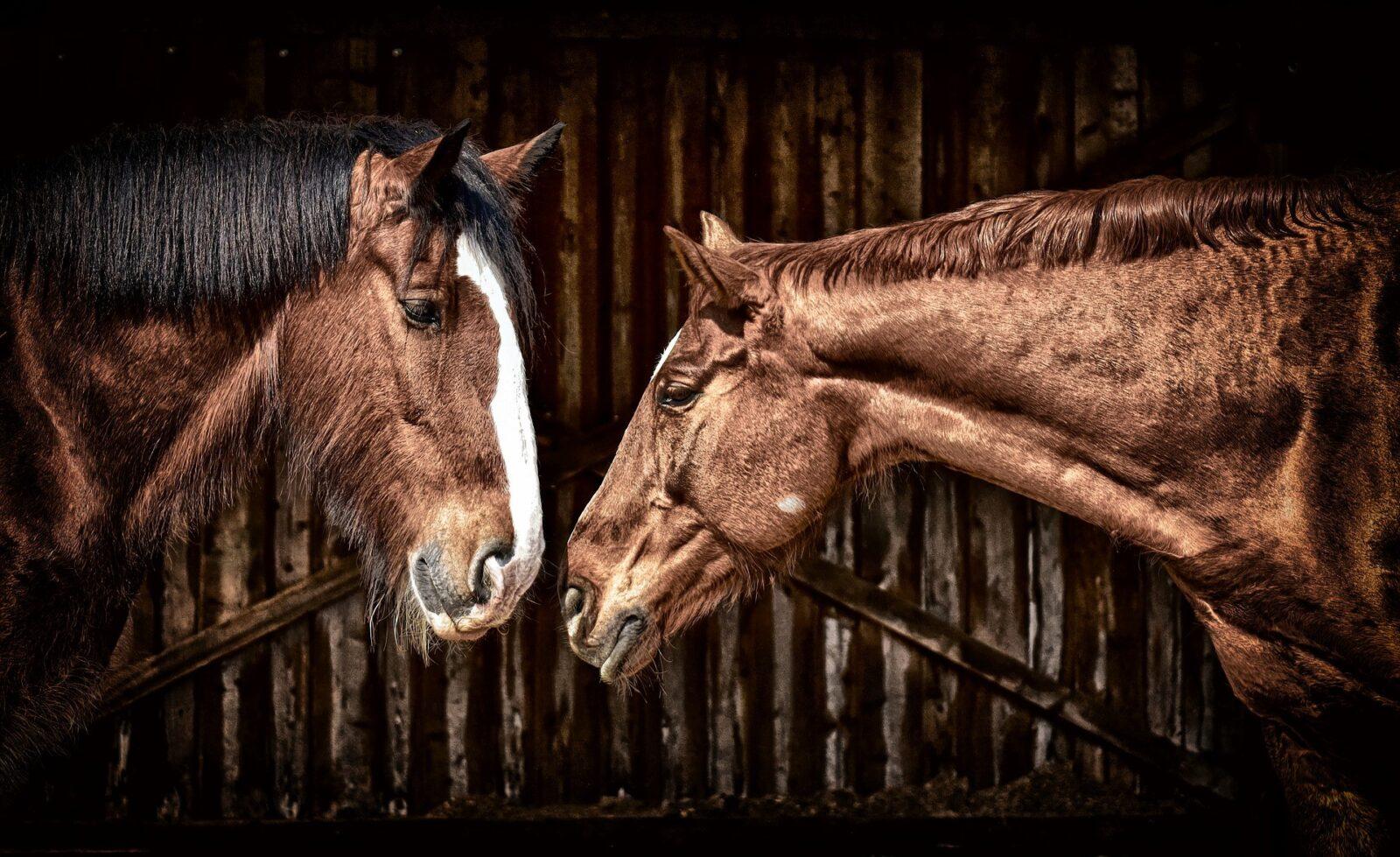 cheval-ecurie 2