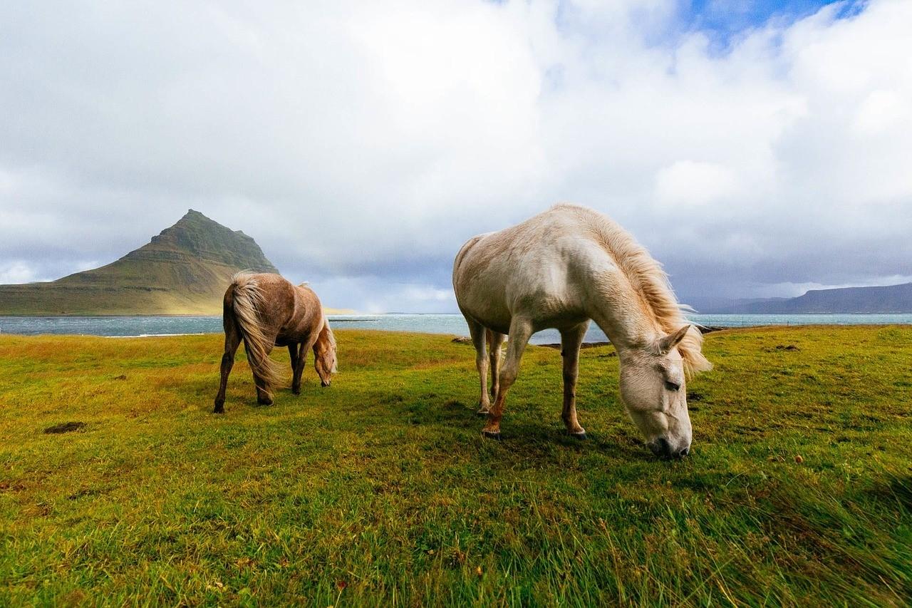 chevaux-au-pâturage-2