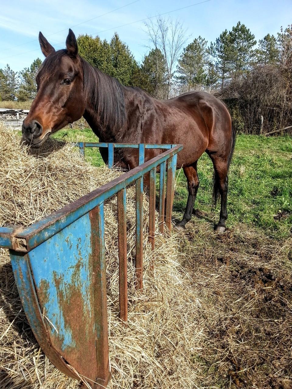 Les différents besoins d'apports d'un cheval de compétition