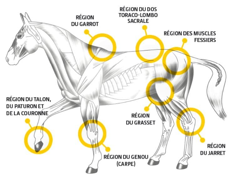 EQUIBAR MOBILITY Soulager l'arthrose du cheval. AMELIORATION DU SYSTEME MUSCULAIRE ET ARTICULAIRE